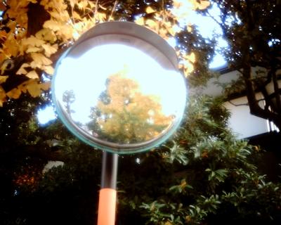 鏡の中イチョウ並木:Entry
