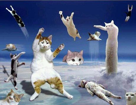 猫画像2014 その8