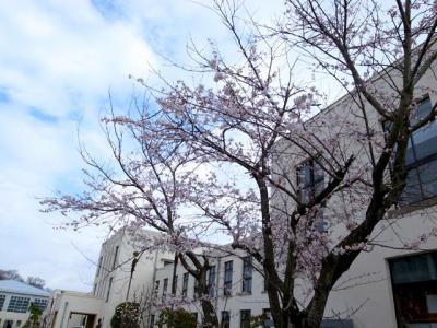桜 4/14 4