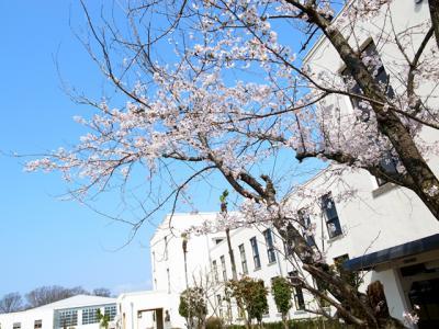桜4/17 3