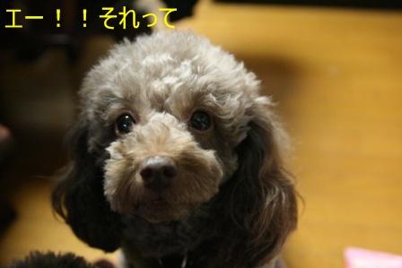 IMG_6949i.jpg