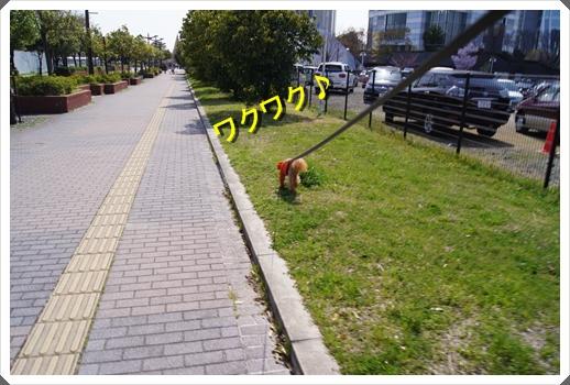 DSC03845b.jpg