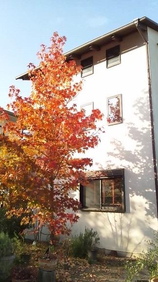 2013楓の木3