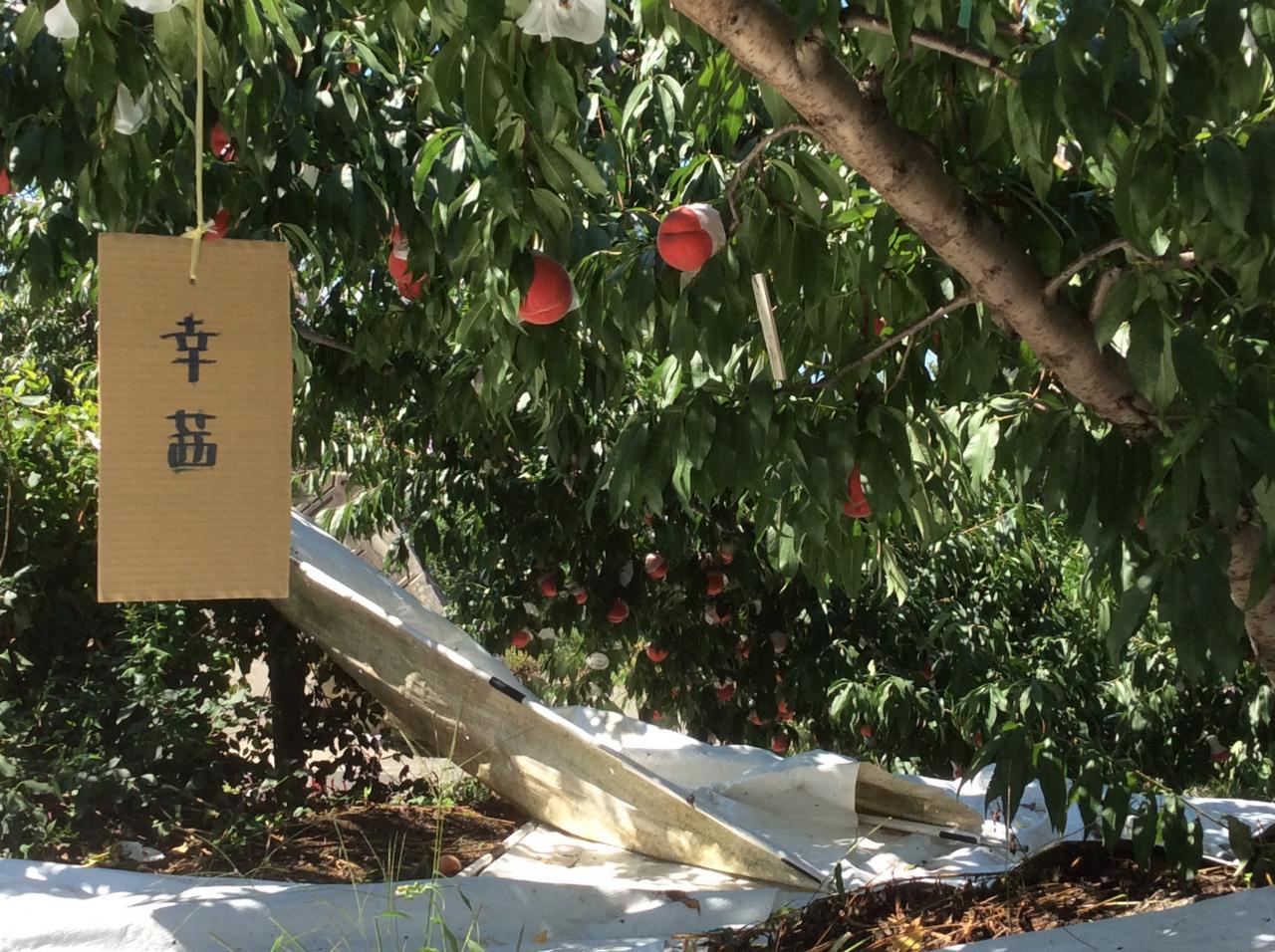 浅間園(桃狩り)