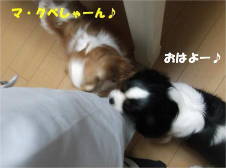 01-2_convert_20121204181841.jpg