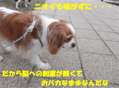 010_convert_20121112172824.jpg