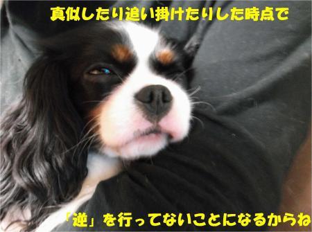 011_convert_20121120193400.jpg