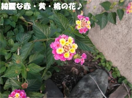 013_convert_20121120193423.jpg