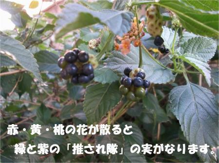 014_convert_20121120193436.jpg