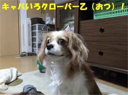 015_convert_20121114181215.jpg