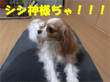01_convert_20120611180646.jpg