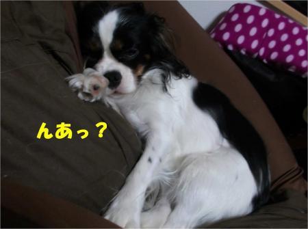 01_convert_20121026174344.jpg