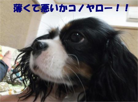 01_convert_20121108173307.jpg
