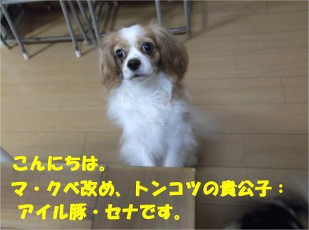 01_convert_20121113171855.jpg