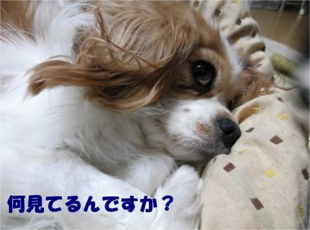 01_convert_20121116155236.jpg