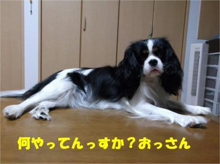 01_convert_20121126180246.jpg