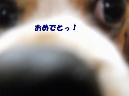 01_convert_20121207194959.jpg