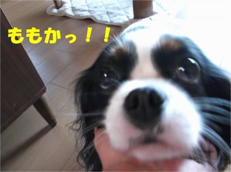 01_convert_20140123190915.jpg