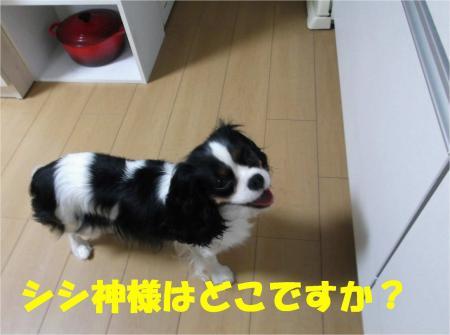 02_convert_20120611180715.jpg