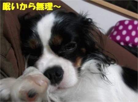 02_convert_20121026174359.jpg