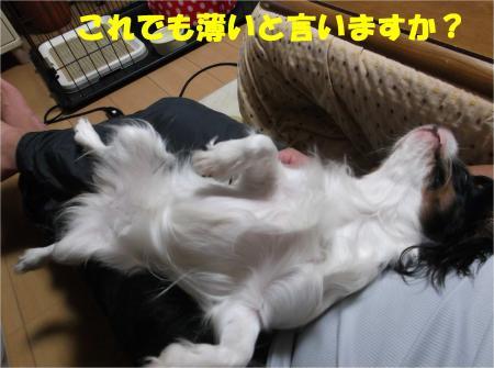 02_convert_20121108173322.jpg