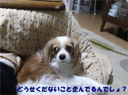 02_convert_20121116155251.jpg