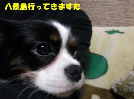 02_convert_20121126180306.jpg
