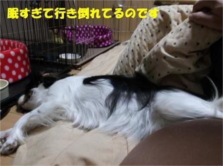 02_convert_20121128172956.jpg