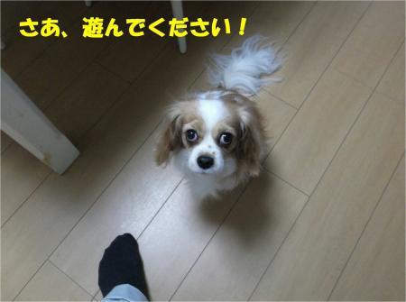 02_convert_20121204181855.jpg