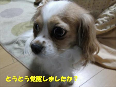 02_convert_20121207195011.jpg