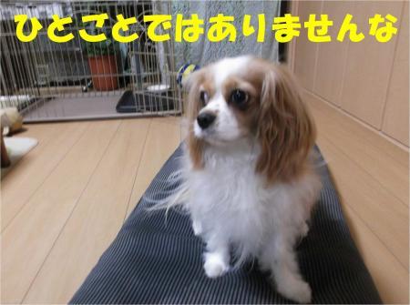 03_convert_20120611180743.jpg
