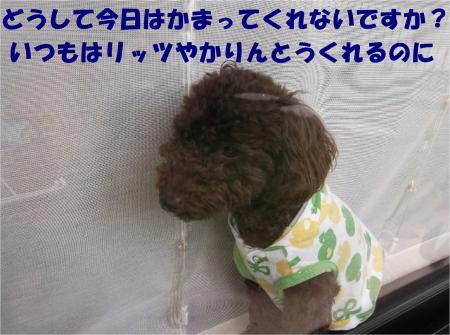 03_convert_20121009182122.jpg
