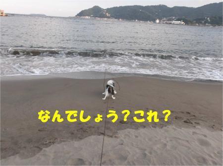 03_convert_20121029173519.jpg