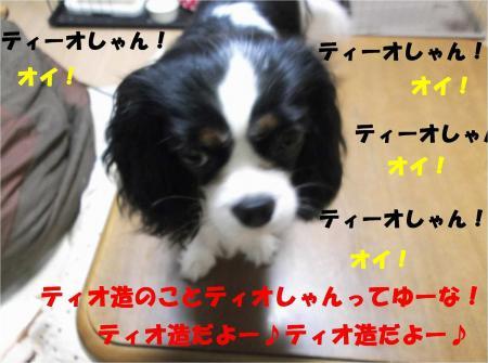 03_convert_20121114180934.jpg