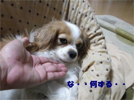 03_convert_20121116155304.jpg