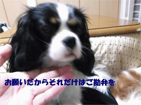 03_convert_20121126180319.jpg