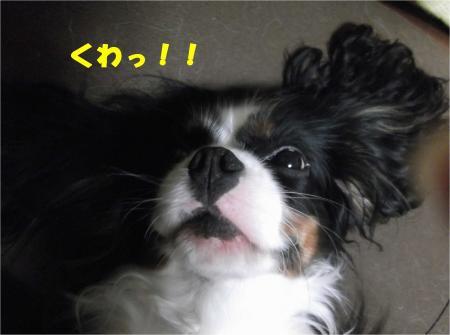 03_convert_20121127174748.jpg