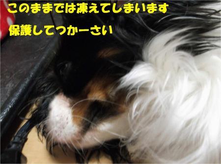 03_convert_20121128173009.jpg