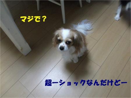 03_convert_20121204181909.jpg