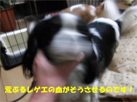 03_convert_20121210174631.jpg