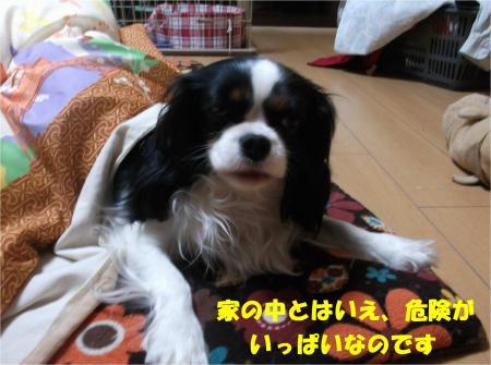 03_convert_20140115193849.jpg