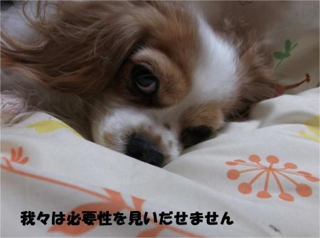 03_convert_20140116201236.jpg