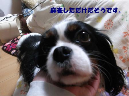 03_convert_20140129195838.jpg