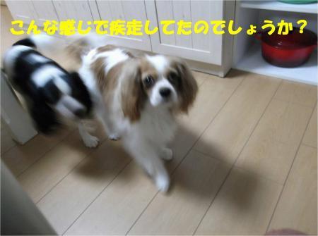04_convert_20120611180807.jpg