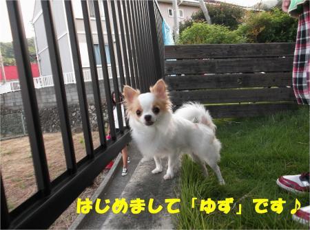 04_convert_20121009182159.jpg