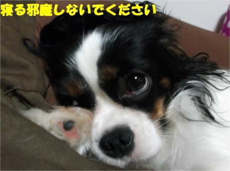 04_convert_20121026174427.jpg