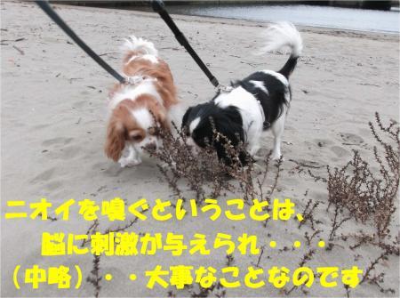 04_convert_20121112172706.jpg