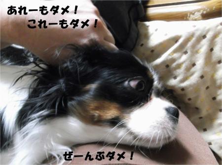 04_convert_20121114180947.jpg