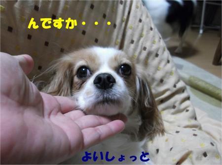 04_convert_20121116155316.jpg