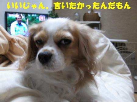 04_convert_20121120193228.jpg